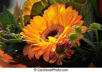naranja, Gardenia, hojas
