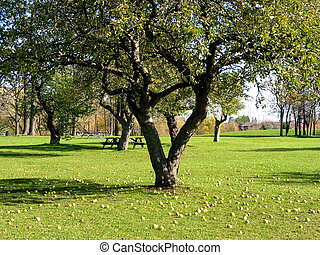 Park with apple trees 1 - Park in late summer with apple...