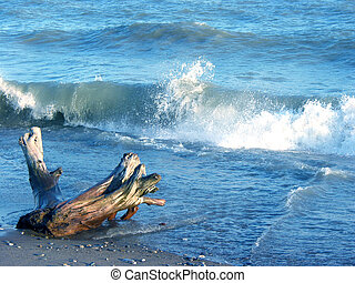Waves at beach and a weather worn stump on a shore