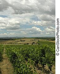 Vineyard - Tuscan Vineyard