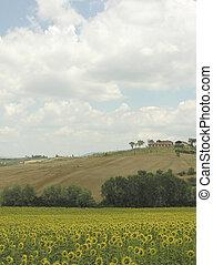 Tuscany - tuscany landscape