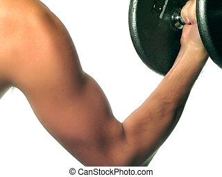 Bicep Curls Excercise - A closeup of a mans arm doing bicep...