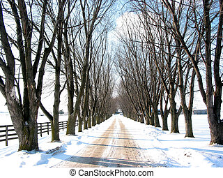 Winter tree lined lane