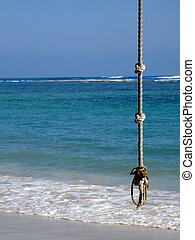 Tropic Rope Swing - A rope swing hanging in front of the...