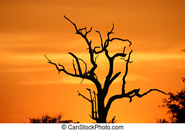 African sunset in the Kruger National Park