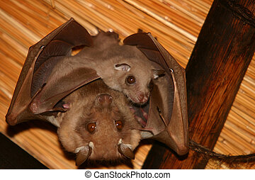 Batman - Mother bat hanging with baby