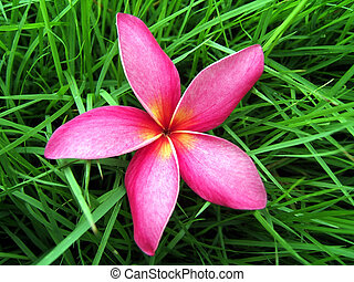 Flower on grass - Fresh red flower on fresh grass