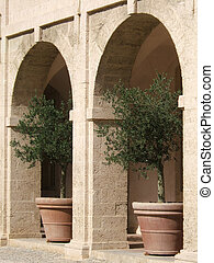 Olive-Trees - Two olive trees under arches