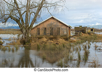 Flood, Svensen Island 3 - Photo of flooded pastures and...