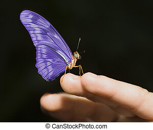 Purple Butterfly - Delicate purple butterfly on a child\\\'s...