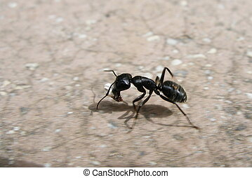 ant - running ant