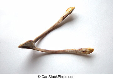 wishbone2 - Wishbone from a capon