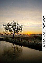 Tree reflection - Dutch tree sunrise reflection