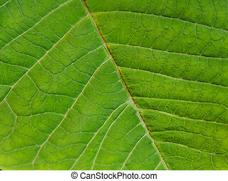 Detail of a leaf