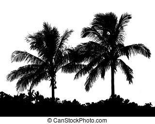 Palm Trees and Shrubs - -- seen as silhouette or outline