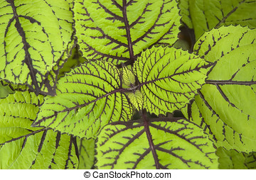 green leaves - close up of green plant leaves