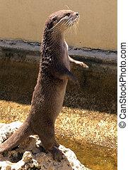 Otter - Cheeky Otter