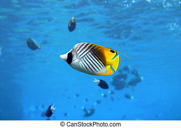Angel Fish - Colorful fish at seaworld - australia