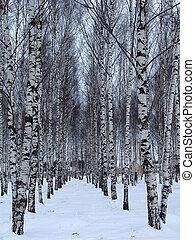 Birchgrove 2 - Birch rows in a village