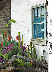 Cactus Garden Window - Old window over a cactus garden