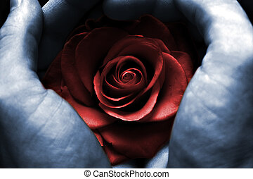 Red Rose - Hands holding a red rose