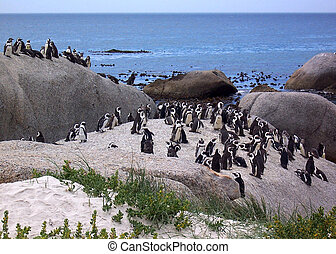 penguins by sea - penguins on rocks by sea