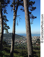 cape town through trees - looking at cape town and table...