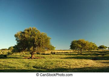 Farm field. Uruguay
