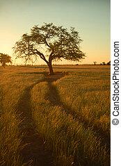 Lonely tree (2) - Farm field