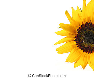 Sunflower half - Half of sunflower isolated on white...