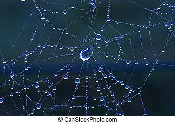 Blue toned spider web - Morning dew on spider web