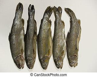 Fish - Fresh Fish