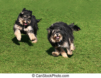 Happy dogs - Happy dog running in grass