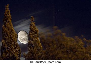 moon lit trees