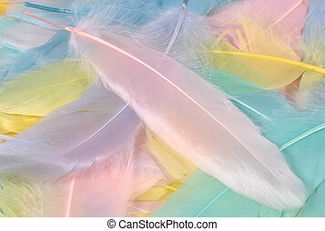 Pastel Feathers - Photo of Pastel Colored Feathers