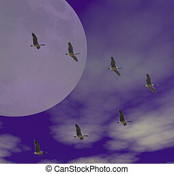 canadian geese - moon and canadian geese