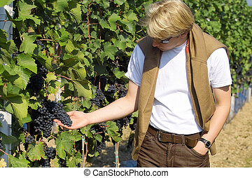 Checking the grapes - winemaker checking the dark wine...