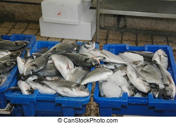 Fresh Fish at an outdoor market, Akko, Israel
