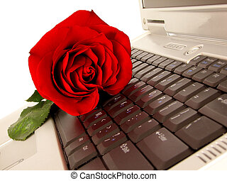 Chat Love - red rose on laptop keyboard