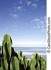 Cactus Beach - Cactus with beach and blue sky