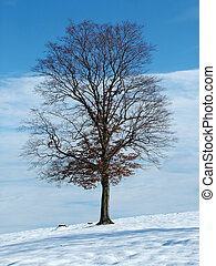 Tree - Lonely tree in winter