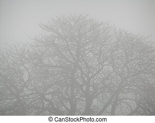 Bleak Winter - Fog filters an old tree in Winter