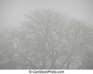 Bleak Winter - Fog filters an old tree in Winter.