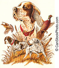 Hunting - Dog