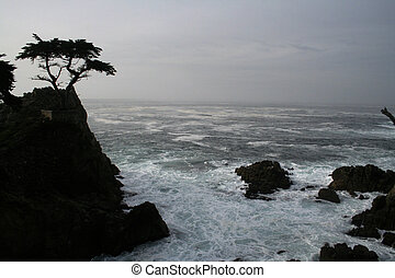 cypress - Lone Cypress at dawn
