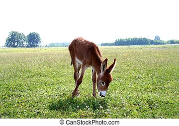 Donkey - Digital photo of a little donkey taken in the...