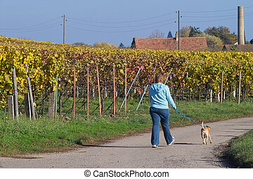 Walking the dog - a woman walking her dog in wineyards,...