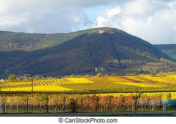Colourfull wineyards - wineyards full of light and colour,...