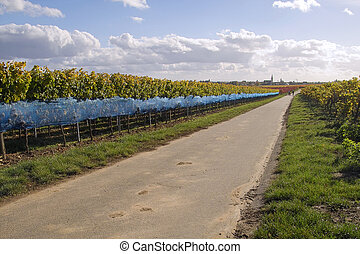Road in wineyards - a walk along the road in wineyards,...