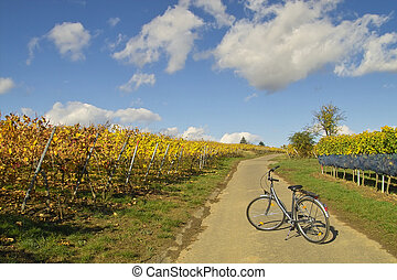Bicycle in wineyards - abandoned bicycle in wineyards,...